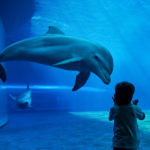 What are the Conditions  for Dolphinariums
